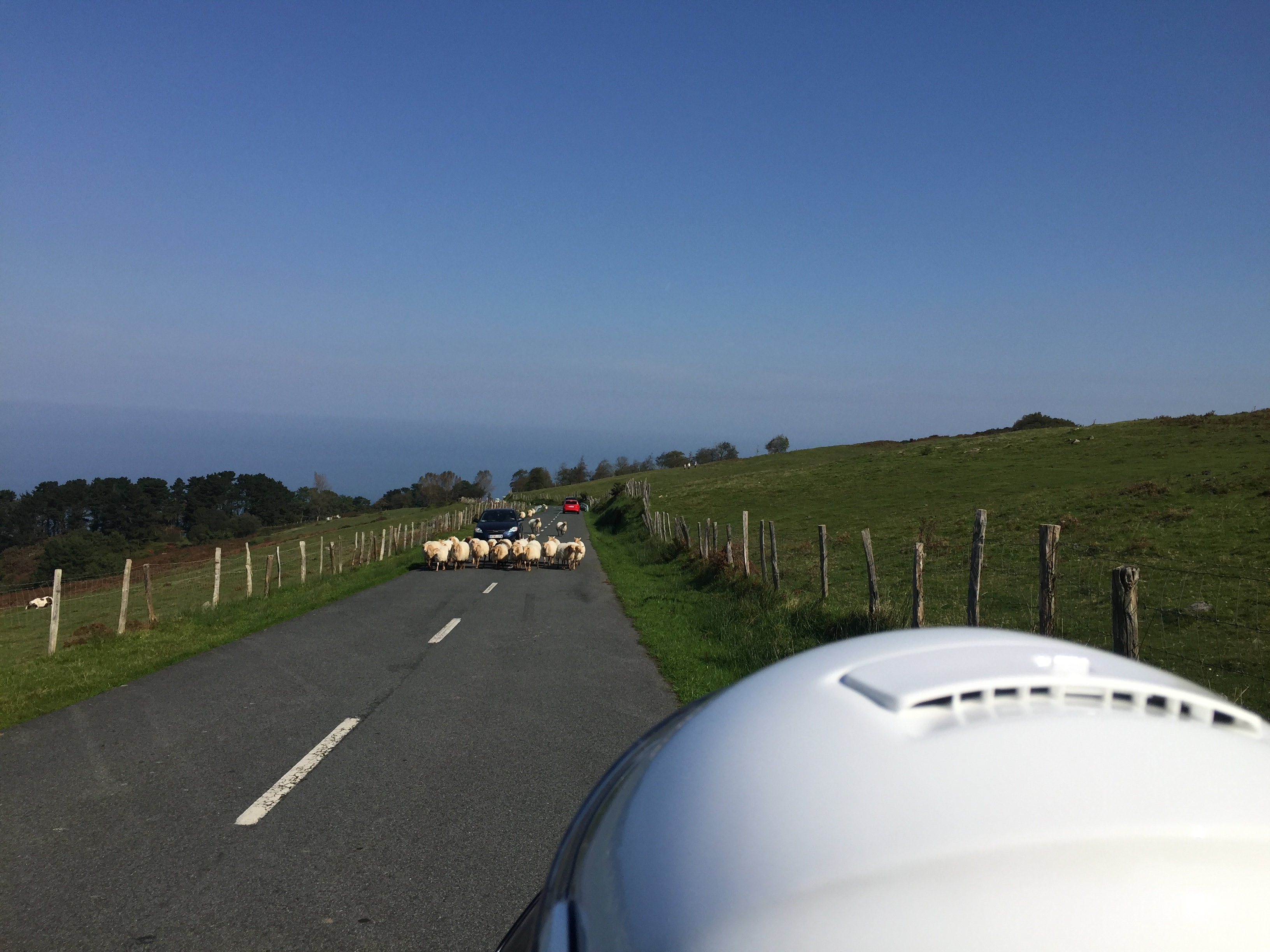 Ovejas Lachas por la carretera